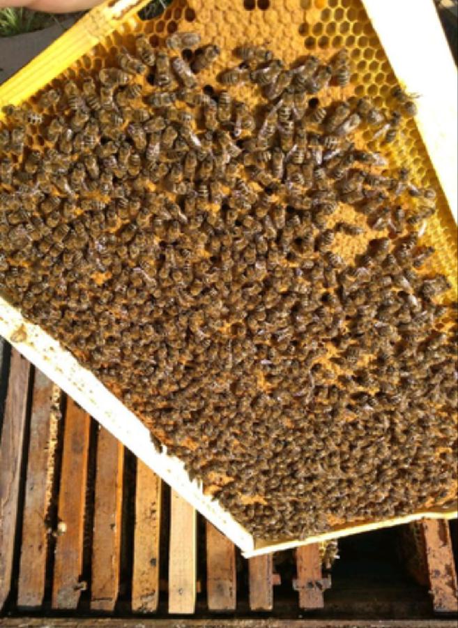 Пчелопакеты 4 Рамки карпатка