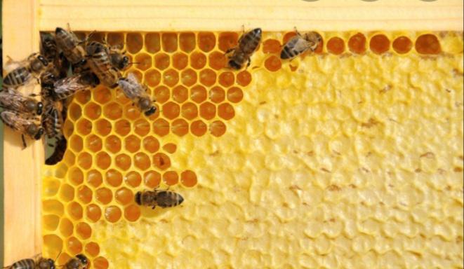 Продам пчелопакеты карніка