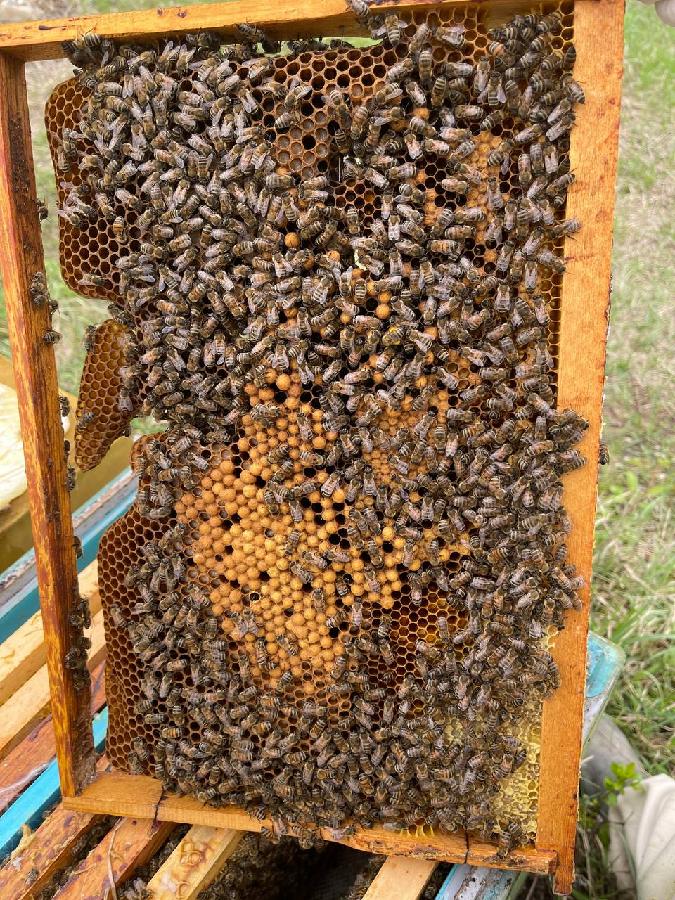Пчелопакеты Карпатка 4 Рамки