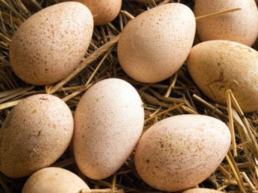 Продам утиное яйцо для инкубации