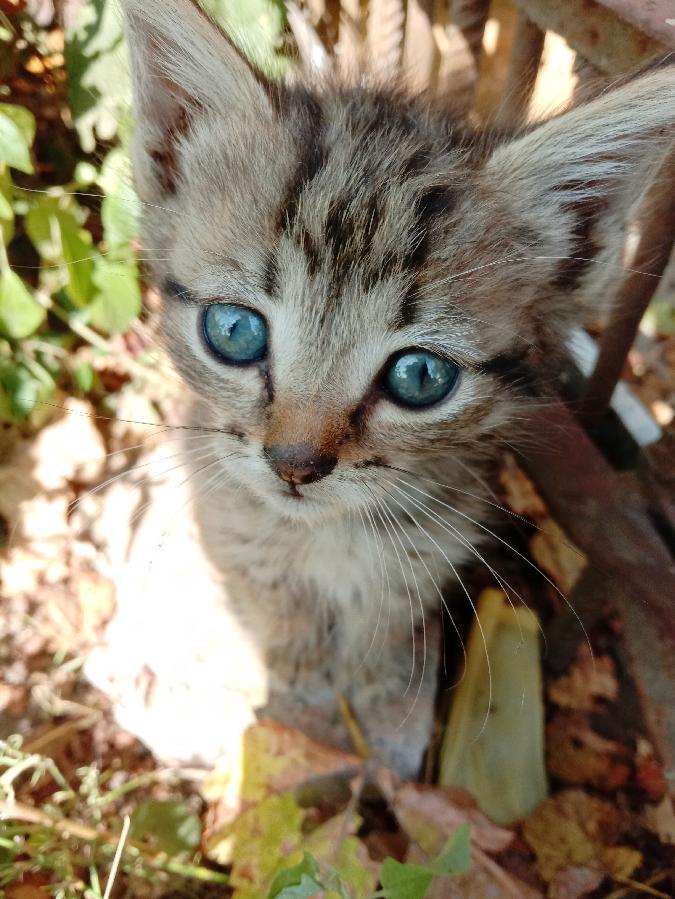 Отдам в хорошие руки котёнка