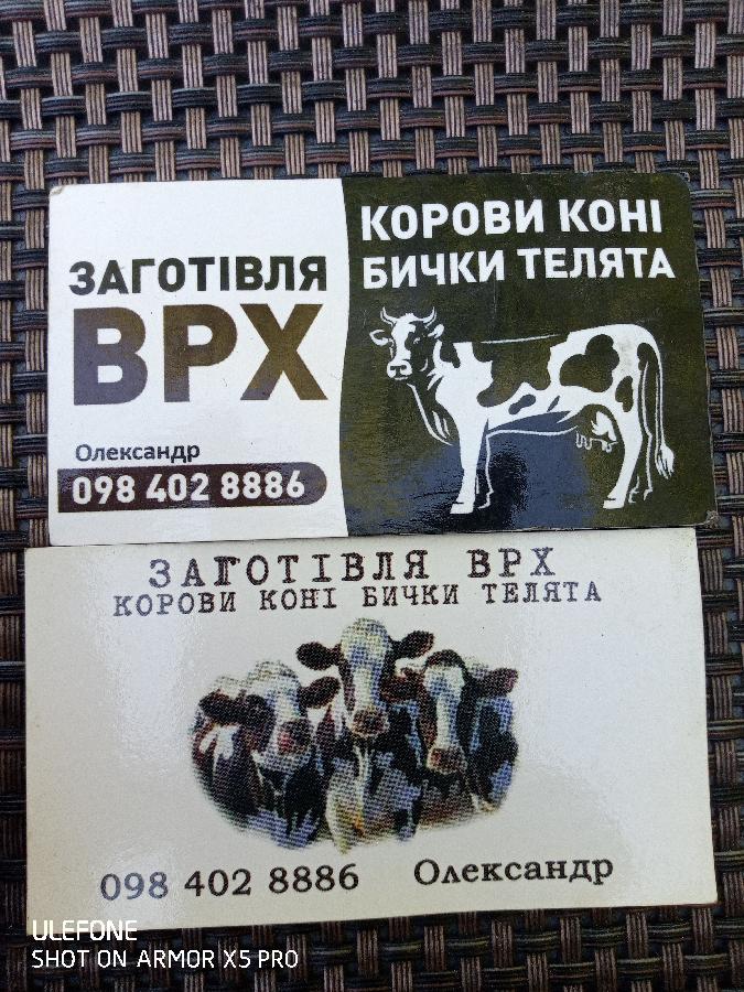 Врх коні корови на утримання