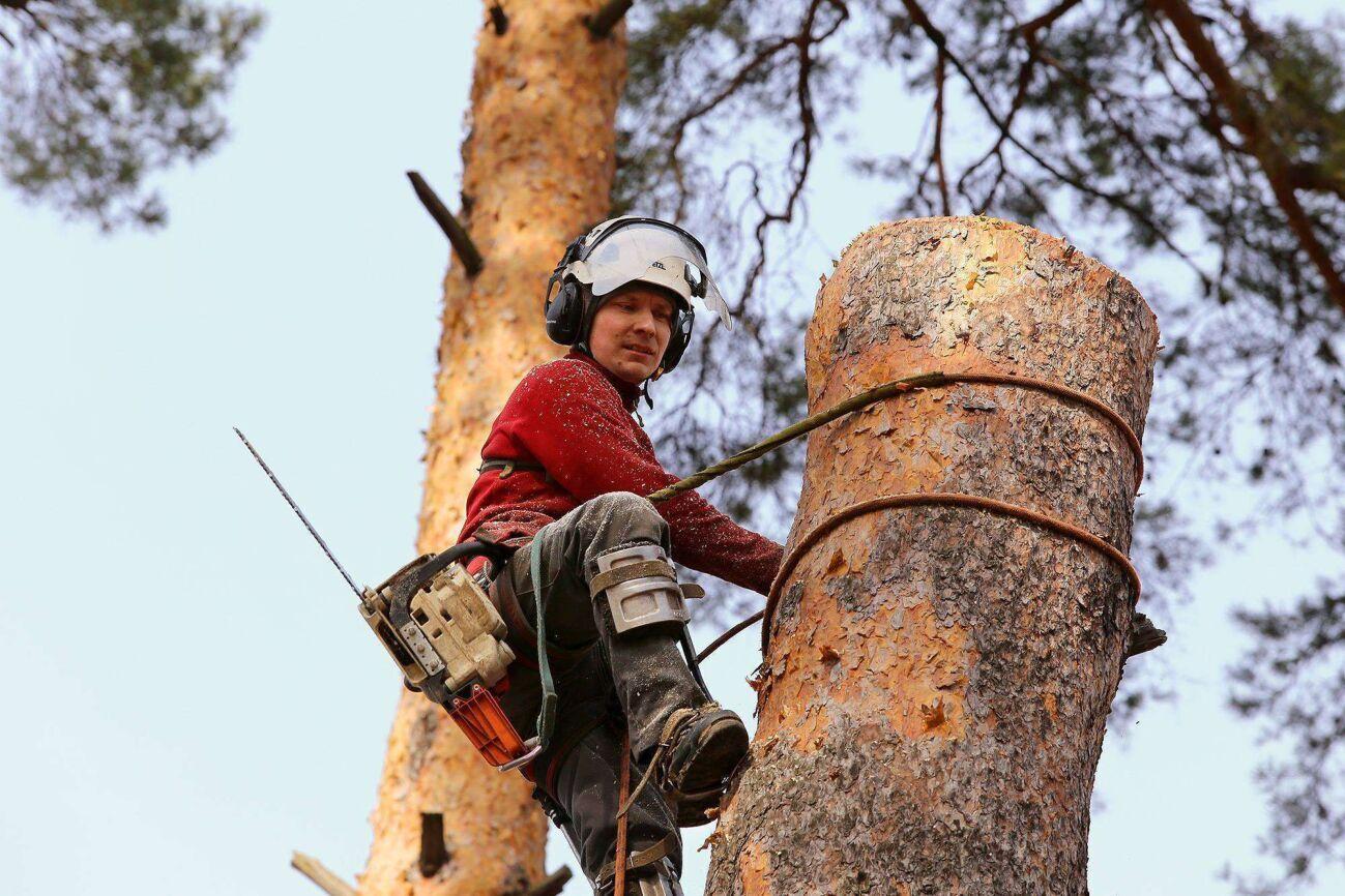 Зрізка, видалення, порізка, спилювання, обрізка та порізка дерев