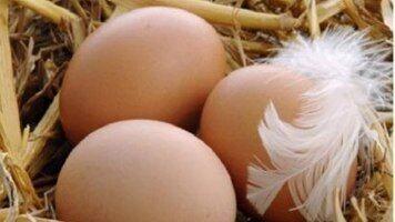 Инкубационное яйцо бройлера кобб500