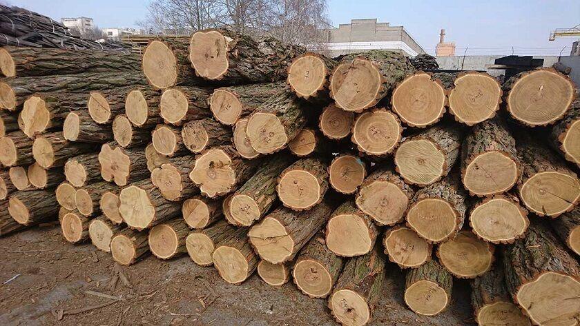 Продам дрова,акация!