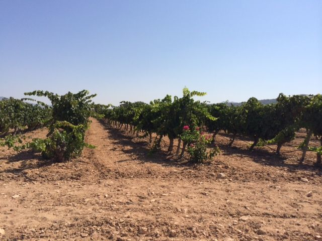 Фото 9 - Продажа винного завода в Испании