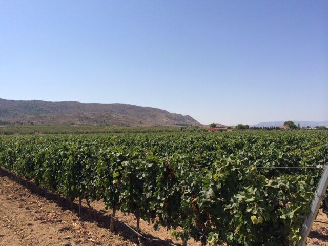 Фото 8 - Продажа винного завода в Испании