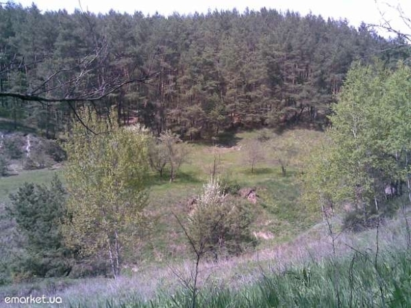 Фото - Дачный участок в Солоницевке