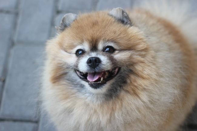Фото - Стрижка собак Троещина. Стрижка кошек Троещина