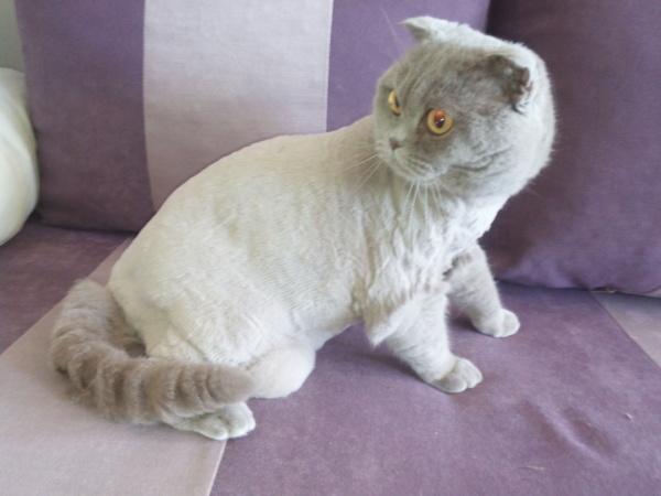 Фото 3 - Стрижка собак Троещина. Стрижка кошек Троещина