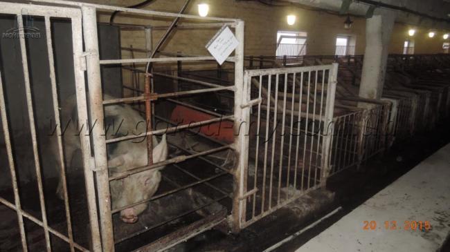 Продам свиноферму 5000 кв.м. в Днепропетровской области