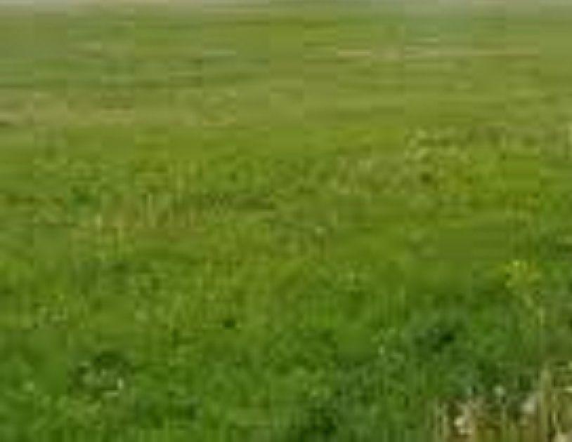 Фото - Продам земельный участок Институт Таирова, Виноградарь, ул. Научная
