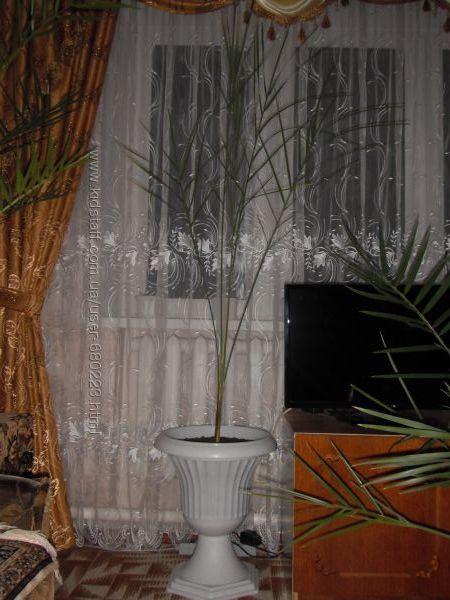финиковая пальма 12 лет