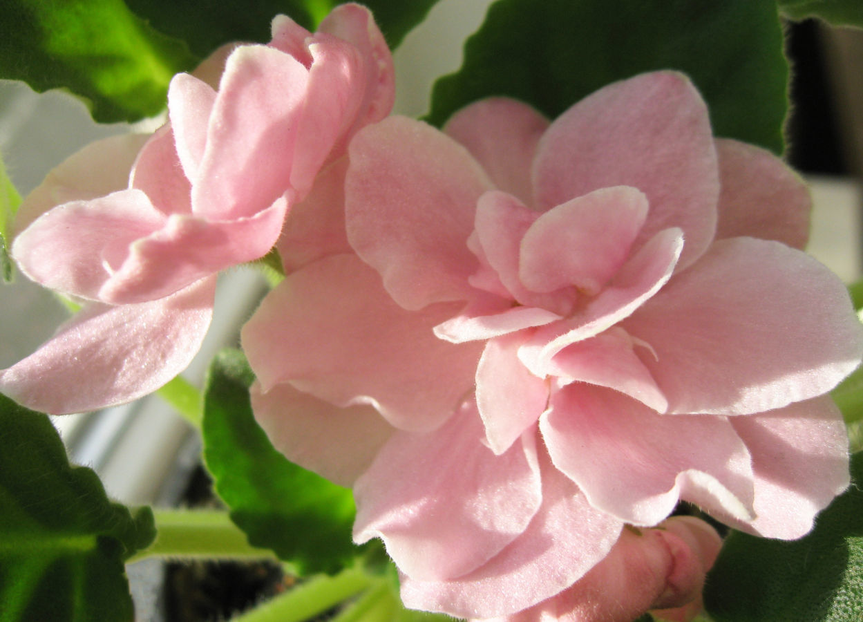 необычные красивые картинки цветы