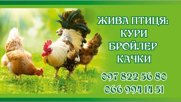 Продам кури, качки, бройлер