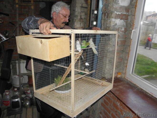 Клетки для попугая своими руками