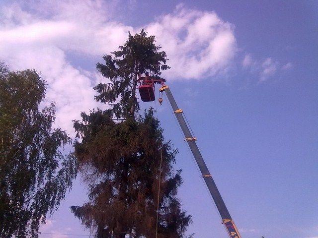 Фото - Валка деревьев, удаление, спил деревьев, продажа дров. Славянск и др.