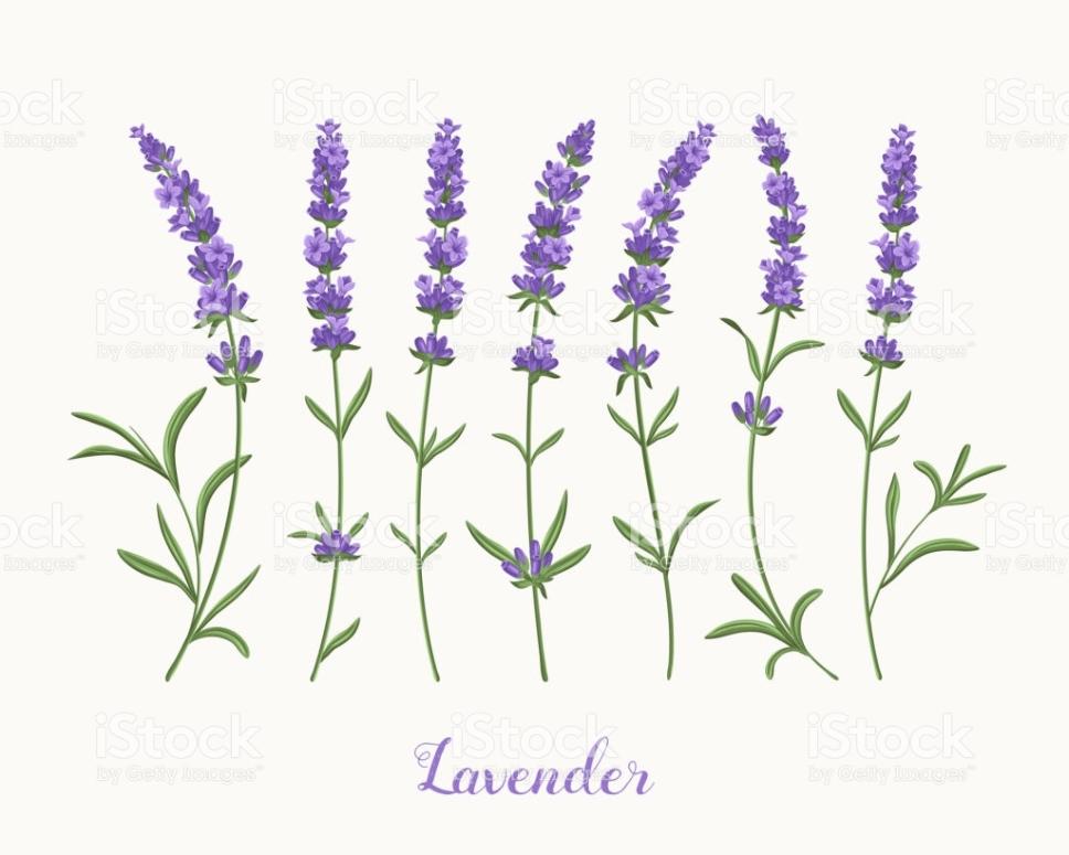 Lavendersummer_ua